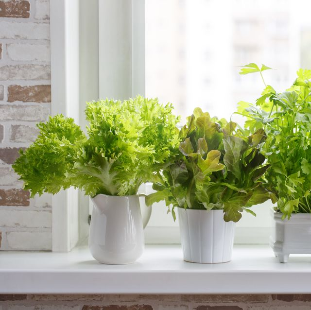 herbs-in-white-pots